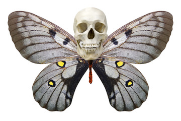white skull with butterfly wings. isolated on white background