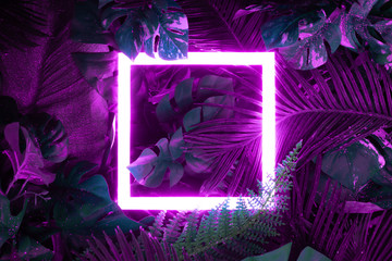 Creative fluorescent color layout made of tropical leaves with neon light square. Flat lay. Nature...