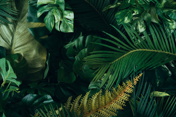 Wall Murals Plant Creative layout made of tropical leaves. Flat lay. Nature concept.