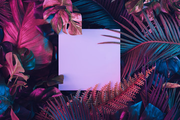 Wall Mural - Creative fluorescent color layout made of tropical leaves with paper card note. Flat lay. Nature concept.