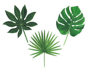 Tropical leaves watercolor illustration botany set of monstera palm