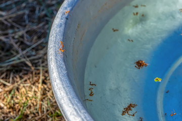 Some ants walking on the edge of the tub and lots of dead ants are in the tub.