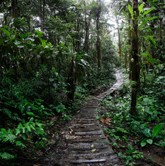 jungle trail winding trough the Amazon rain forest of Colombia. A path of adventure and exploration trough the tropical jungle