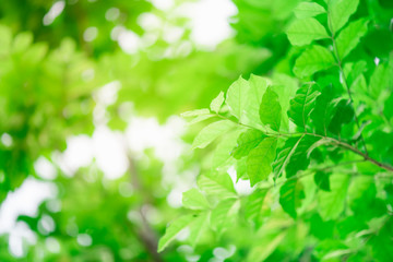 Closeup nature green leaf on blurred background with copy space, ecology concept.
