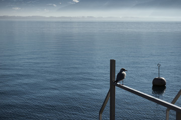 Silhouette of Seagull sitting on post next to lake montreux.