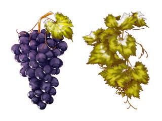 Grape and leaf Fototapete
