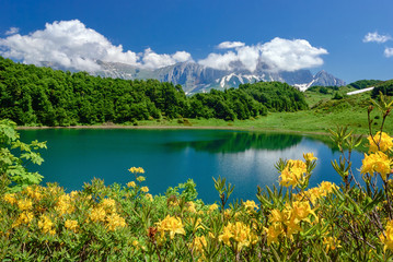 Lake in the mountains with flowers in the foreground. Lake Huko, Caucasus, Caucasian Reserve
