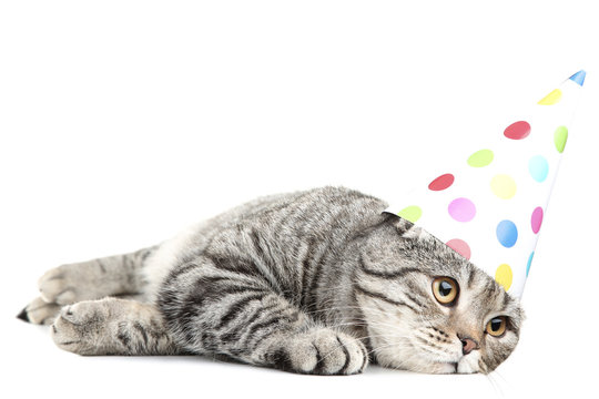 Cute cat with birthday cap lying on white background