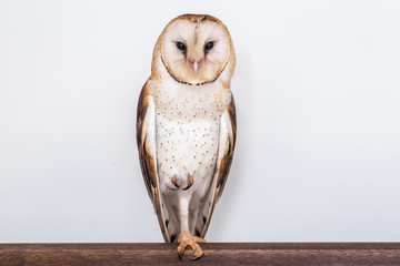 photo owl on white background isolated Wall mural