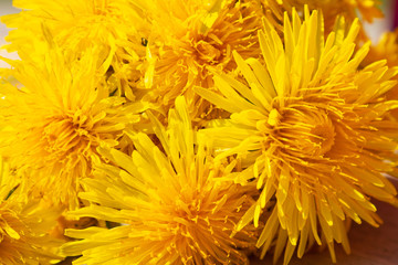 beautiful natural background of yellow dandelion buds close up