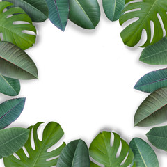 A frame of tropical leaves on a white background. Top view. Copy space.  Flat lay. Mock-up