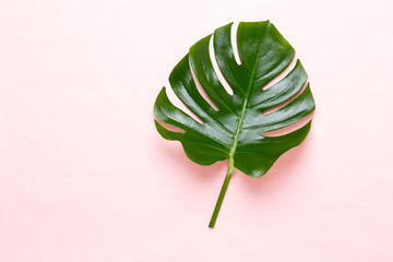 Tropical Jungle Leaf, Monstera, resting on flat surface, on peach background.