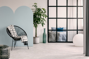 Fashionable living room interior with white and blue wall,green plant in pot and trendy chair