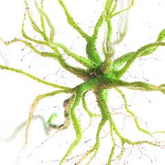 3d rendered illustration of a human nerve cell