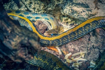 View on the skin of a snake