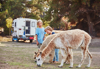Chile, Vina del Mar, two boys stroking llamas in front of a camper in the forest