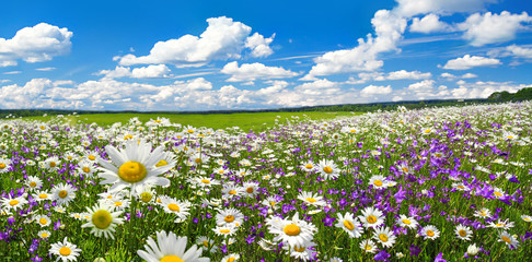 spring landscape panorama with flowering flowers on meadow Wall mural