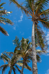 summer breezing palm trees look up sky
