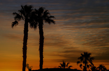 Various Colorful Sunsets with Silhouetted Palm Trees