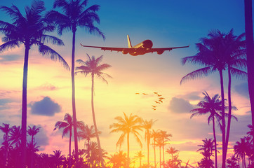 Wall Mural - Airplane flying over tropical palm tree and sunset sky abstract background.