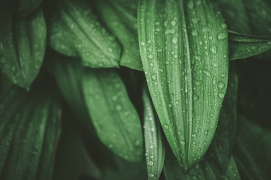 Tropical nature green leaf texture abstract background.