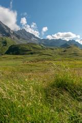 Cow herd in the Alps