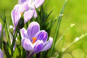 Blumen 1012