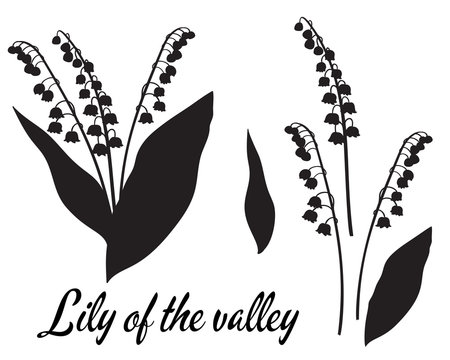 Silhouette of lilly of the valley flower.