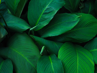 Green tropical leaves pattern background, Natural background and wallpaper.