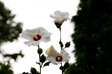 White Fllowers Reaching