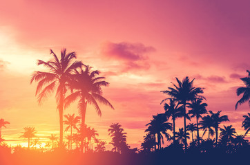 Tropical palm tree with colorful bokeh sun light on sunset sky cloud abstract background.