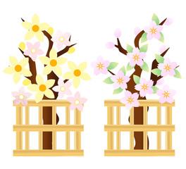 橘 桃の花 桜
