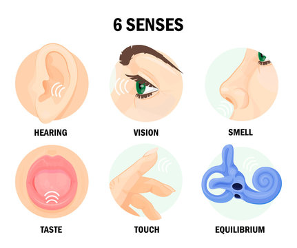 Six sense organs of human body with names