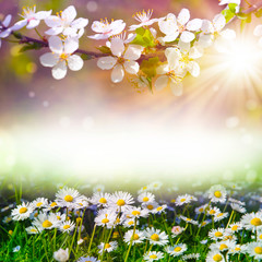 art abstract spring background with spring blooming
