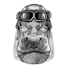 Animal wearing aviator helmet with glasses. Vector picture. Hippo, Hippopotamus, behemoth, river-horse t-shirt, tattoo, emblem, badge, logo, patch