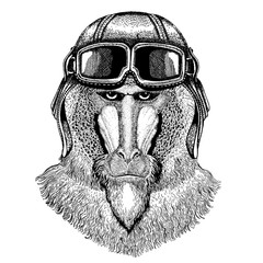Animal wearing aviator helmet with glasses. Vector picture. Monkey, baboon, dog-ape, ape Hand drawn image for tattoo, emblem, badge, logo, patch