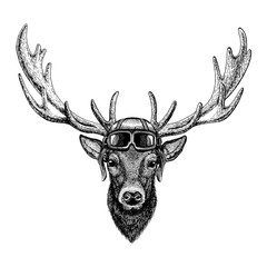 Animal wearing aviator helmet with glasses. Vector picture. Deer Hand drawn illustration for tattoo, emblem, badge, logo, patch, t-shirt