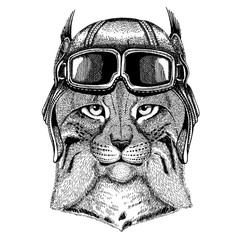 Animal wearing aviator helmet with glasses. Vector picture. Wild cat Lynx Bobcat Trot Hand drawn image for tattoo, emblem, badge, logo, patch