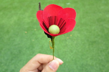 Hands holding a red poppy hand made from cloth, bunch of memorial day, with green grass background. Object concept.
