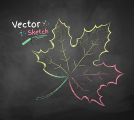 Vector chalkboard drawing of autumn leaf