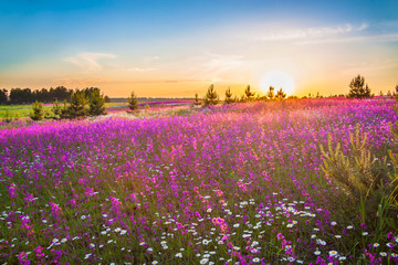spring landscape with blooming wild flowers in meadow