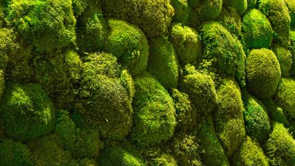 Moosgreen