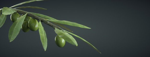 Fototapeta Olive branch on dark background, with olives and leaves obraz