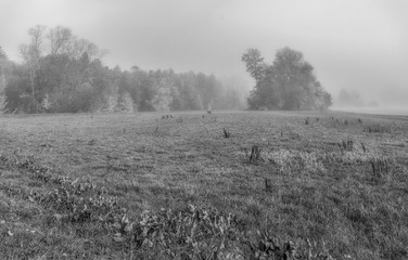 Monochrome outdoor autumnal nature panoramic image of a rural countryside with fall foliage,trees,meadow,grass on a misty sunny day in impressionistic vintage painting style