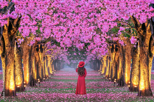 Wall mural Young woman walking in rows of beautiful pink flowers trees.