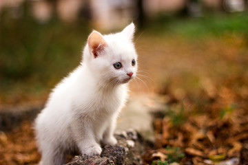 little white cat sits on a big stone in the park. A cat staring something.