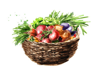 Freshly picked vegetables in basket. Watercolor hand drawn illustration, isolated on white background