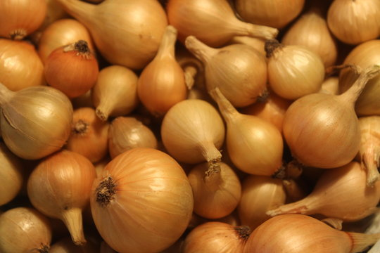 onions at market. Yellow onions crop. Bulb onions prepared for planting.