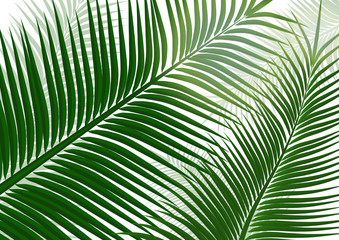 Tropical background. Realistic palm tree leaves. Exotic beauty for travel Design, promotion and marketing. Vector illustration - Vector graphics