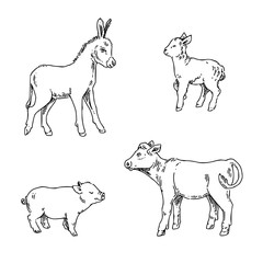 Set of young farm animals. Lamb, pig, calf and donkey. Sketch. Engraving style. Vector illustration.